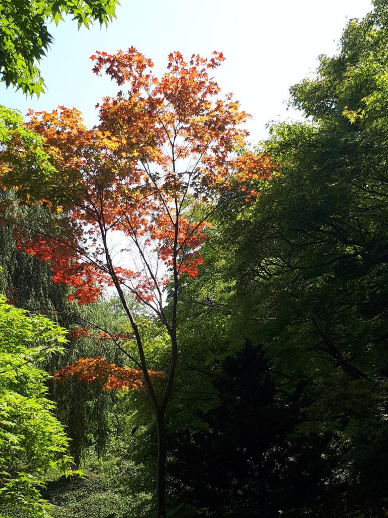Luisenpark Baum