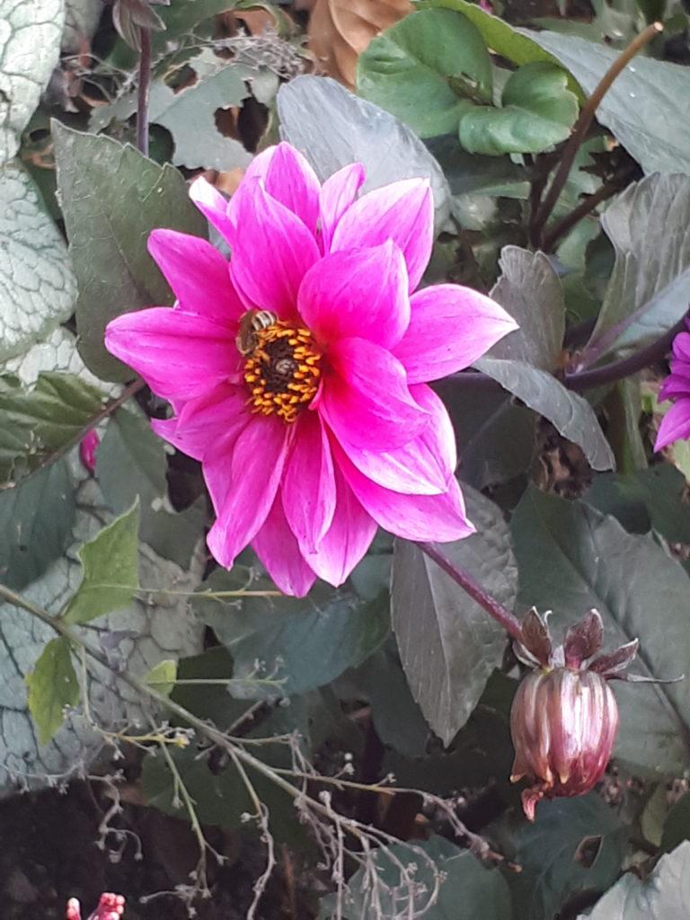 Luisenpark Mannheim Blume